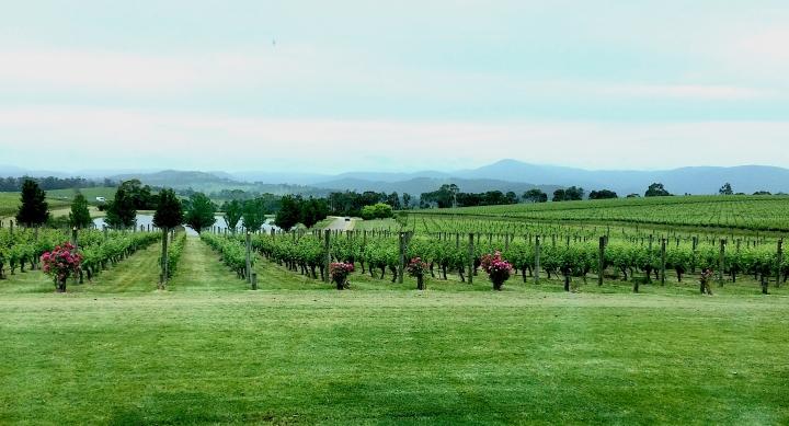 Oakridge Winery Coldstream vista 2017