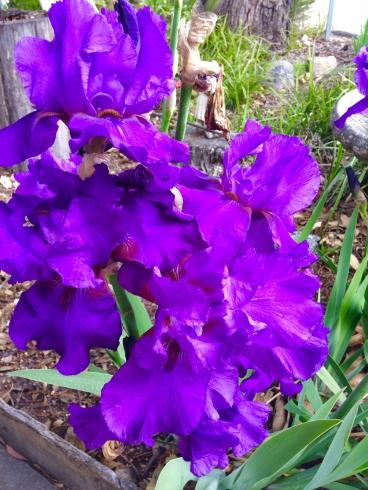 Shepparton flowers b