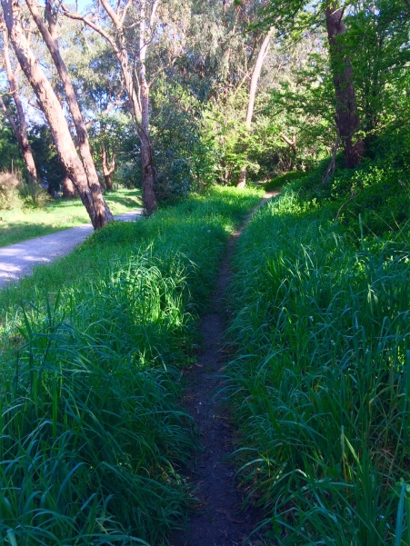 Lilydale walks Warburton trail Oct spring 2017