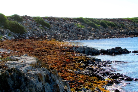King Island Currie harbour kelp beach Jan 2018
