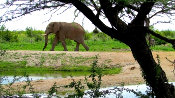 FEb 2018 Tau ellie strolling waterhole