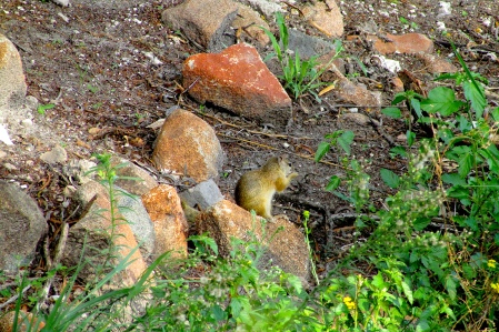 Feb 2018 Tau ground squirrel a1