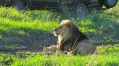 Feb 2018 Tau morning safari lion awake