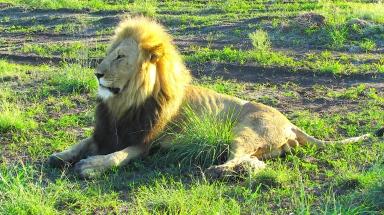 Feb 2018 Tau morning safari lion2 spots breakfast