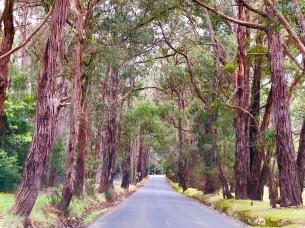 Scenic drive Yarra Valley Mooroolbark Aug 2018