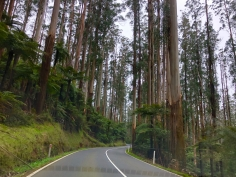 Road to Marysville from Healesville Aug 2018