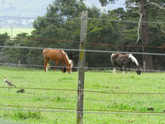 Art at Linden Gate neighbour view horses 23 Oct 2018