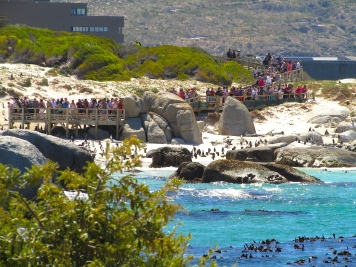 Cape Town Feb 2019 Boulder Beach penguin viewing